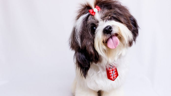 Let's-Know-Some-Fun-Facts-about-Dogs-on-civicdaily