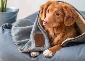 Tips-to-Keep-Your-Pet-Healthy-Happy-and-Warm-on-CivicDaily