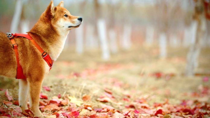 Look-For-Before-Buying-Dog-Training-Collars-&-FAQs-on-CivicDaily